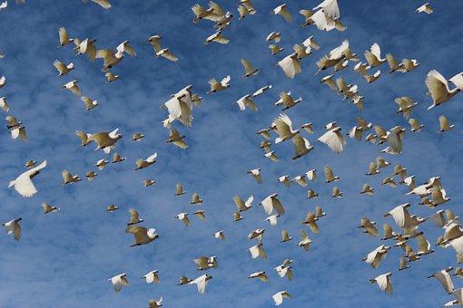 White, Dove, Birds, Fly, Animal, Nature, Blue, Sky