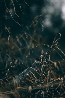 Dry, Grass, Branch, Outdoor, Dark, Blur