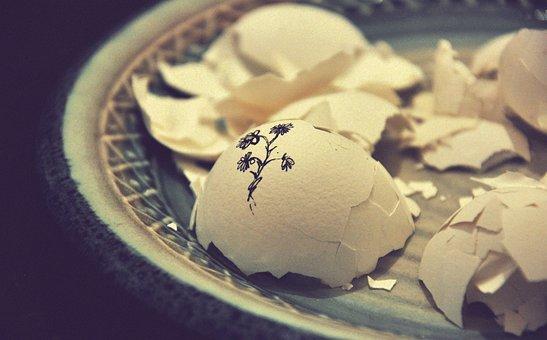 Plate, Egg, Shell, White, Broken, Art