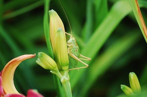 Grass, Grasshopper, Close, Meadow, Creature, Beautiful