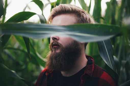People, Man, Green, Plants, Field, Farm