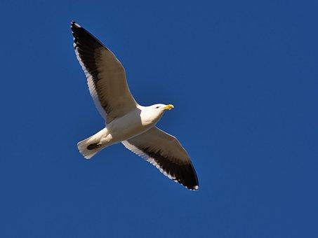 Blue, Sky, Bird, Flying