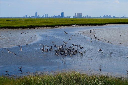 Marsh, Water, Birds, Grass, Nature, Landscape, Green