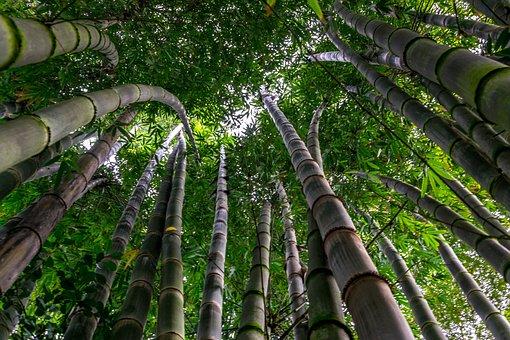 Bamboo, Tree, Green, Leaves