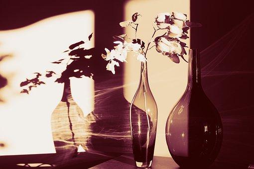 Wall, Light, Shadow, Dark, Glass, Jar, Bottle, Flower
