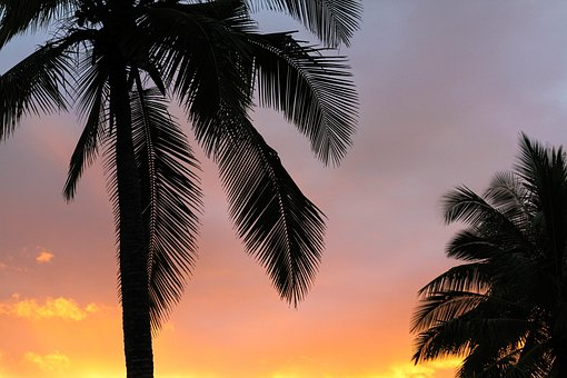 Coconut, Tree, Sky, Dark, Orange, Clouds, Sunset