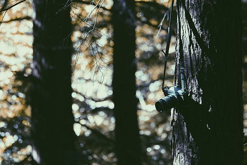 Tree, Plant, Wood, Nature, Camera, Lens, Photography