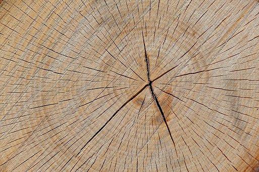 Tree, Wood, Trunk, Texture, Closeup