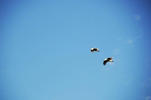 Sky, Birds, Blue, Freedom, Summer, Flight, Tropical