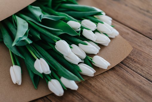 Green, Leaves, Plants, Flower, White, Petal, Bunch