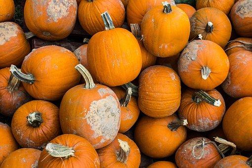 Harvest, Winter, Squash, Vegetable, Pumpkin