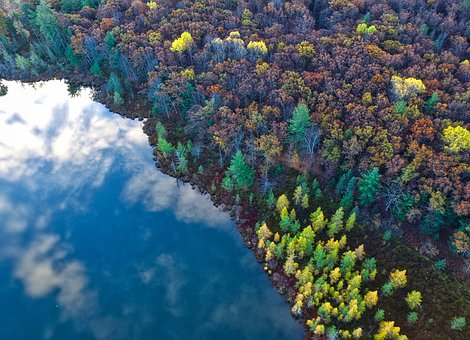Trees, Clolorful, Aerial, View, Plant, Forest, Nature