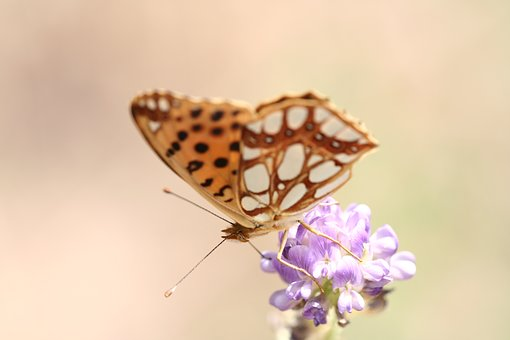 Butterfly, Animal, Macro, Color, Close, Nature, Garden