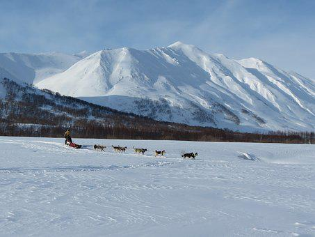 Dog, Laika, Husky, Race, Sleds, Dog Sled Race, Sled