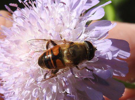 Fly, Nature, Insect, Animal World, Macro, Flight Insect