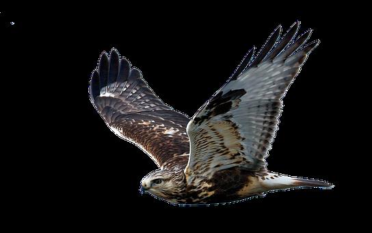 Hawk, Flight, Raptor, Bird Of Prey, Fly, Feather