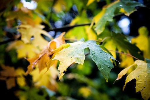 Leaf, Autumn, Fall, Plant, Blur, Wet