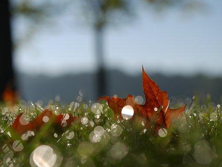 Leaf, Orange, Nature, Grass, Fall, Autumn, Blur