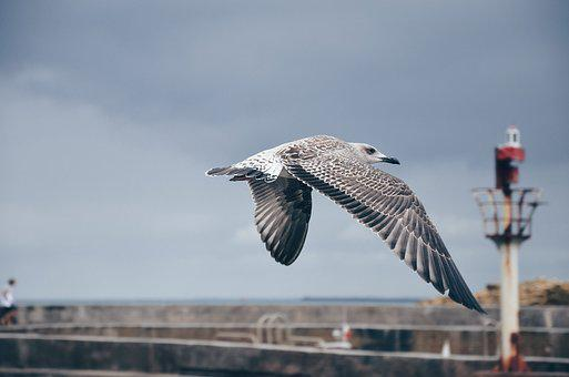 Bird, Animal, Fly, Nature, Pole, Wall, Blur