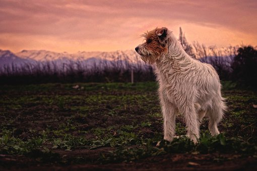 Dog, Pet, Puppy, Animal, Farm, Field, Yard, Green