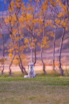 Dog, Puppy, Animal, Pet, Playground, Grass, Autumn