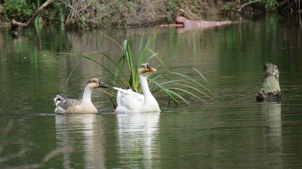 Cambodia, River, Forest, Birds, Khmer, Lake