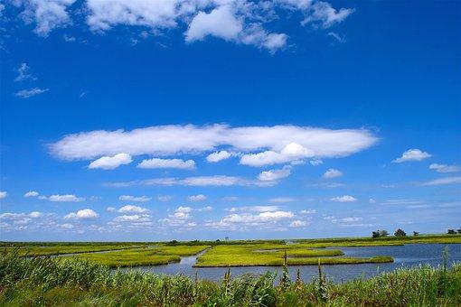 Marsh, Water, Sky, Grass, Nature, Landscape, Green