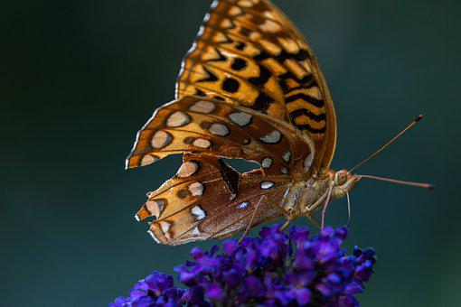 Nature, Insect, Butterfly, Close Call, Garden, Wing
