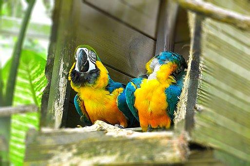 Parrot, Bird, Colorful, Plumage, Color