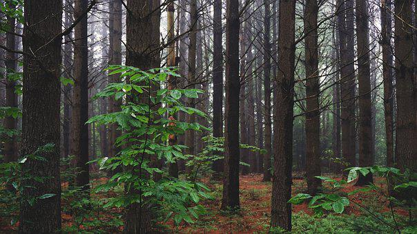Woods, Forest, Leaves, Trees, Adventure, Travel