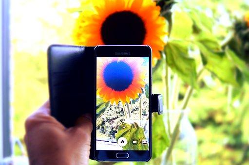 Hand, Capture, Camera, Phone, Sunflower, Nature