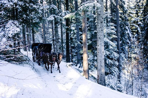Horse, Chariot, Winter, Snow, Flakes, Trees, Ice, Cold