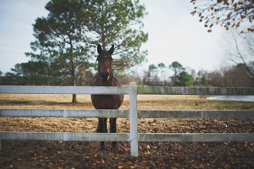 Animals, Horse, Mane, Beautiful, Ranch, Fence, Trees