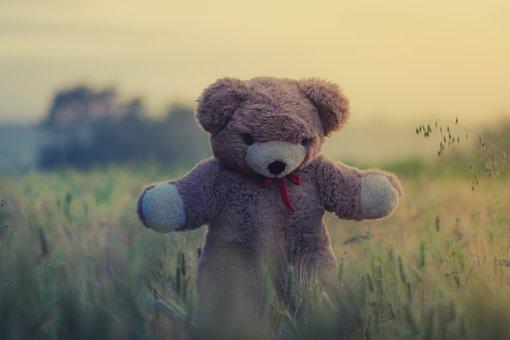 Teddy Bear, Toy, Child, Kid, Field, Grass, Plants