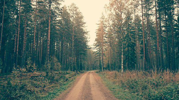Nature, Landscape, Trees, Woods, Forest, Street, Road