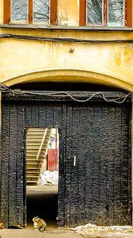 Odessa, Gate, Cat, Door, Window