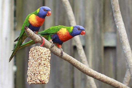 Animal, Aviary, Background, Beak, Bird, Blue, Blurry