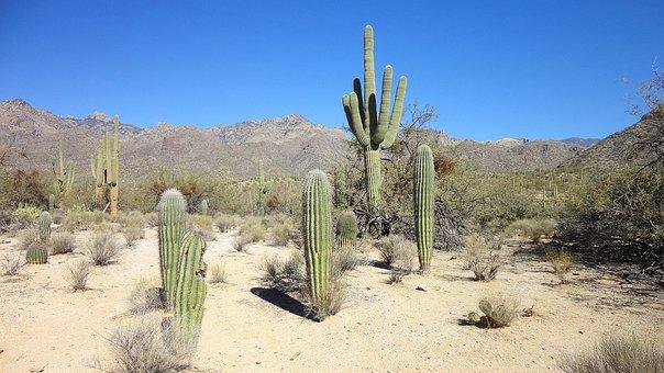 Desert, Cactus, Arizona, Tucson, Shrubs, Sand, Saguaro