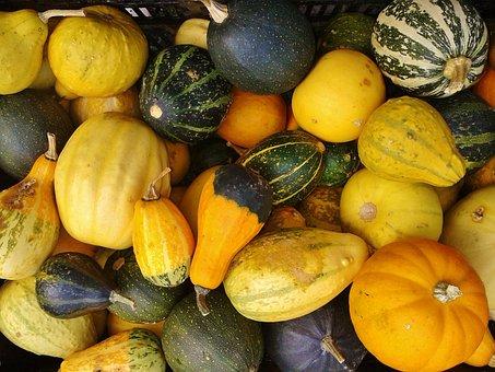Gourd, Pumpkin, Autumn, Nature, Thanksgiving