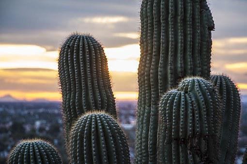 Arizona Desert, Saguaro Cactus, Saguaro, Landscape