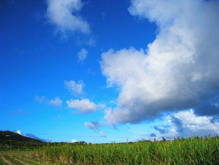 Sugar Cane Field, Dynamic, Blue, Green, Sky, Cloud