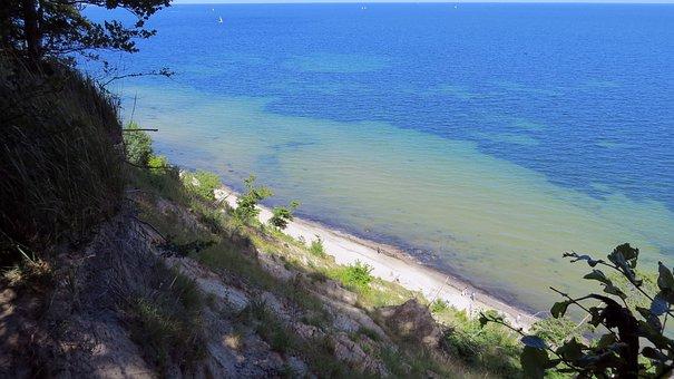 Trees, Baltic Sea, Beach, Bank, Holiday Mood, Coast