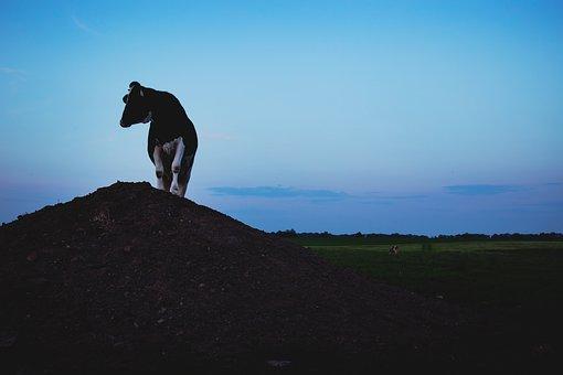 Animals, Mammals, Cow, Land, Sky, Clouds, Horizon
