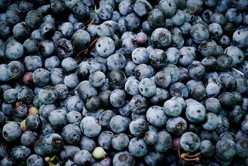 Blueberries, Fruits, Food