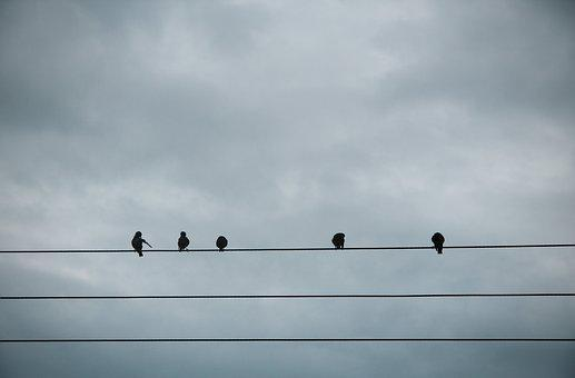 Animals, Birds, Perched, Row, Power, Lines, Sky, Clouds