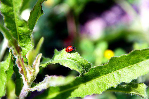 Insects, Ladybug, Cute, Tiny, Small, Leaves, Outdoors