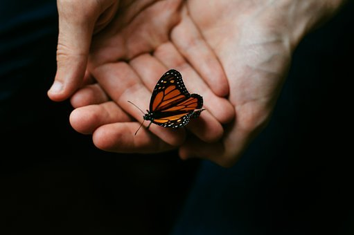 Person, People, Hands, Hold, Butterfly, Perched