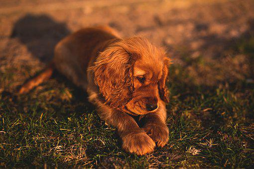 Animals, Dogs, Puppies, Domesticated, Cute, Adorable