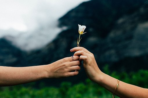 Man, Woman, Couple, People, Hands, Love, Nature, Flower