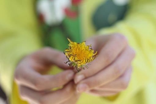 Flower, Nature, Yellow, Garden, Happiness, Green